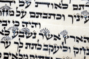 Torah Writing
